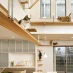współczesny dom dla kota