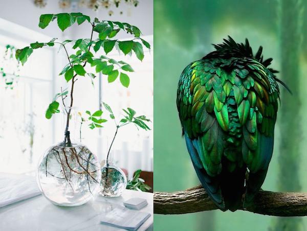 greenery11