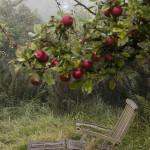 dom wśród jabłoni